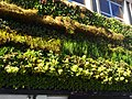 Green Wall, High St, SUTTON, Surrey, Greater London - Flickr - tonymonblat.jpg