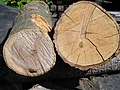 Green wood visual comparison.jpg