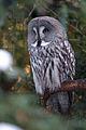 Grey Owl (4210906154) (2).jpg