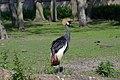 Grue couronnée (Zoo-Amiens).JPG
