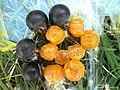 Guabiju guaviyu (myrcianthes pungens) copyleft tropicalfruitseeds-com.JPG