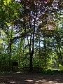 Hünxer Wald Kürbaum 02.jpg