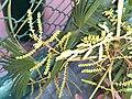HK 上環 Sheung Wan 卜公花園 Blake Garden plants green 掌狀葉 palm leaves February 2020 SS2 03.jpg