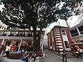 HK Central night 舊中區警署 Ex-Central Police Station 奧卑利街 Old Bailey Street footbridge 荷李活道 Hollywood Road 大館 Tai Kwun 中庭廣場 square November 2019 SS2 02.jpg