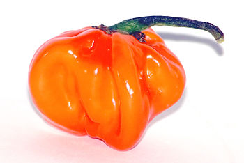This image shows a Habanero chile, which is th...
