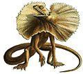 Haeckel Lacertilia (Chlamydosaurus kingii).jpg