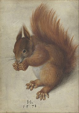 Hans Hoffmann - Red Squirrel - Google Art Project