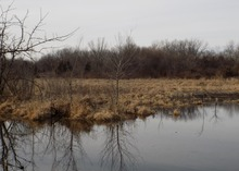 Trees sit in a wetland