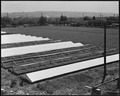 Hayward, California (Hesperian Blvd.). A portion of Negi leased farm as seen from their water tower . . . - NARA - 537800.tif