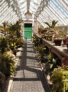 Heligan Greenhouse