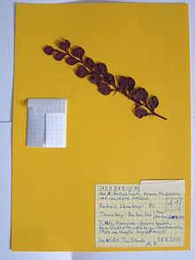 herbarium wikipedia. Black Bedroom Furniture Sets. Home Design Ideas