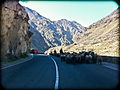 Herding Sheep on Kabul Jalalabad Hwy (5751829875).jpg