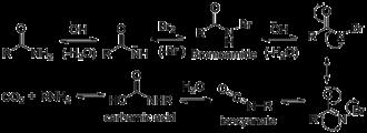 Hofmann rearrangement - Image: Hoffman rearrangement