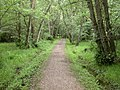 Holmsley, woodland path - geograph.org.uk - 1360259.jpg