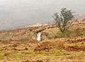 Holne Moor leat near Venford.jpg