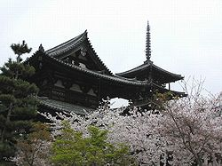 Hōryū-ji at cherry blossom, Ikaruga Town