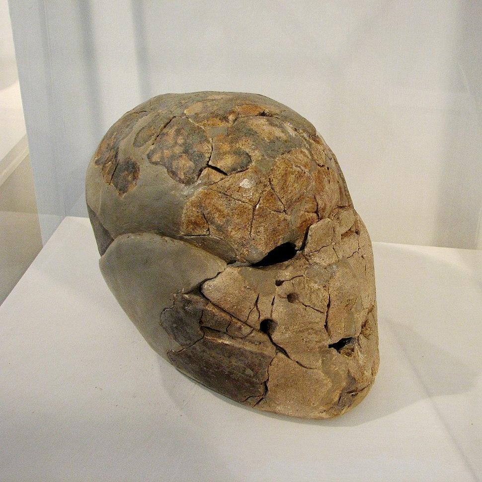 Human skull from Beisamoun