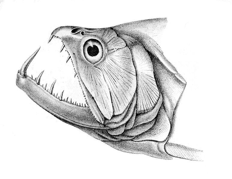 for Garra rufa fish petsmart