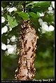 Hymenoptera (6022579506).jpg