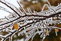 Ice-Branches-9783.jpg