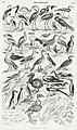Illustration from A History of the Earth and Animated Nature by Oliver Goldsmith from rawpixel's own original edition of the publication 00036.jpg