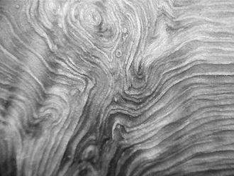 Tree fork - Wood grain pattern of a fork of Fraxinus excelsior (Common ash), as found by stripping off the outer and inner bark layers