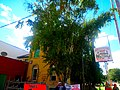 Jailhouse Tap - panoramio.jpg