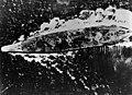 Japanese battleship Yamato underway during the Battle of the Sibuyan Sea, 24 October 1944 (80-G-325953).jpg