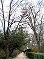 Jardín Botánico de Madrid en febrero (16673680945).jpg