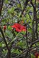 Jardim Botânico da Madeira DSC 0342 (14699641892).jpg