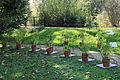 Jardin Henri Gaussen, poivrons.JPG