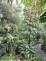 Jardin des plantes Paris Serre tropicale3.JPG