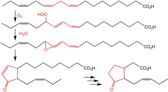 Jasmonic acid - Pathway for biosynthesis of jasmonic acid via allene oxide intermediate.  Highlighted is the pentadiene core that is the site of the reactions.