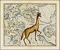 Johannes Hevelius - Camelo Pardalus.jpg