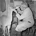 Jonge Guanaco (wilde lama) verstoten door moeder in Artis, Bestanddeelnr 914-7783.jpg