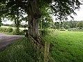 Junction near Kirkbank - geograph.org.uk - 486827.jpg