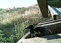 Juniper Dunes Critter Cam (21495079895).jpg