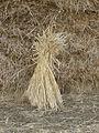 Just a sheaf of wheat - geograph.org.uk - 605846.jpg