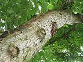 Kůra stromu v parčíku.jpg