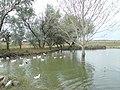 Kacsaparadicsom - panoramio.jpg