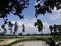 Kahaloo Upazila, Bangladesh - panoramio (3).jpg