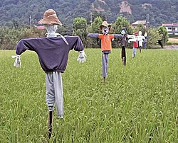 Scarecrows in a rice paddy in Japan