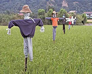 Scarecrow - A grouping of scarecrows in a rice paddy in Japan.