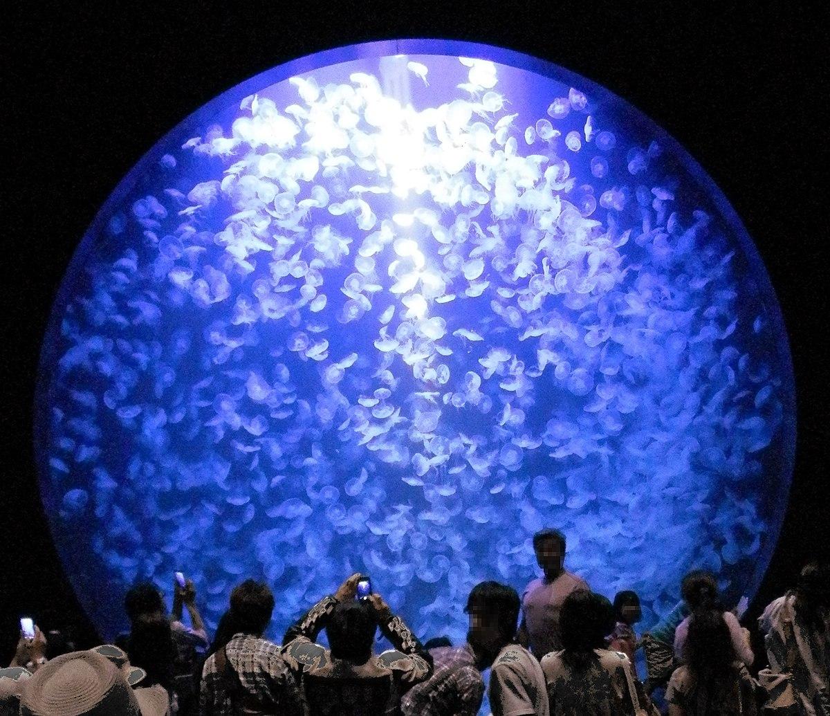 Kamo Aquarium Water tank.jpg