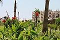 Kargıcak Belediyesi, Kargıcak-Alanya-Antalya, Turkey - panoramio.jpg