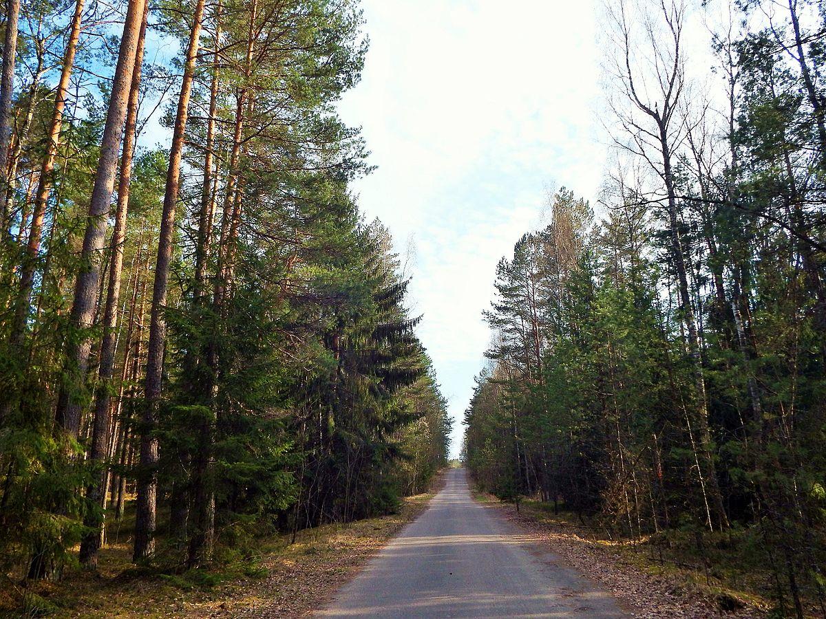 Kazokiškių-Kaugonių miškai – Vikipedija.