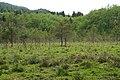 Keutschacher Moor 18, Naturerlebnispfad, Kärnten.jpg