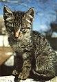 Kittie - Flickr - fazen.jpg