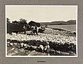 Klipfiskberg, 1920 (7999414371).jpg