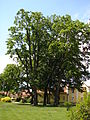 Kostelecký zámecký park (7).JPG
